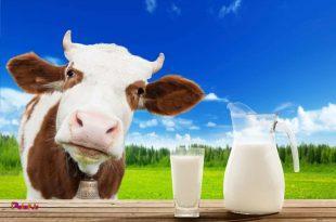 شیر بی مزه