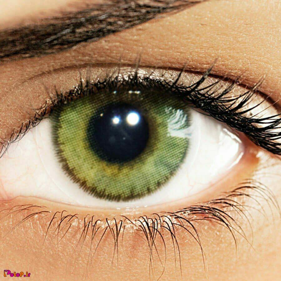 قرینه چشم تنها عضو بدن انسان است که دارای رگهای خونی نمی باشد