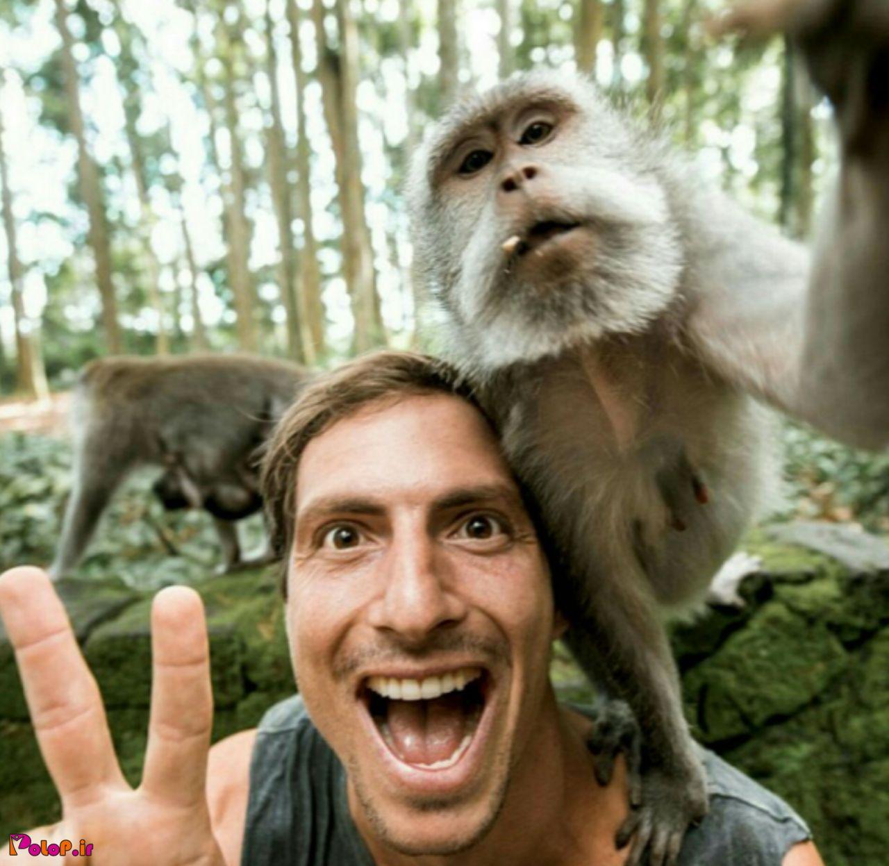 میمون ها همیشه به تقلید از