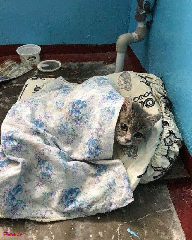 سرما خورده حالش بده واسش دعا کنید!