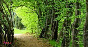 📝 ثبت جهانی جنگل هیرکانی
