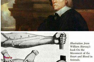 """در سال 1628 پزشک انگلیسی """"ویلیام هاروی"""" جریان خون را کشف کرد"""