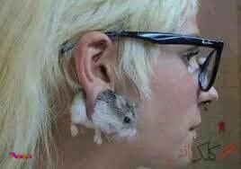 عجیب ترین گوشواره
