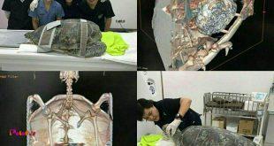 یک لاک پشت در تایلند به دلیل بلعیدن سکه هایی