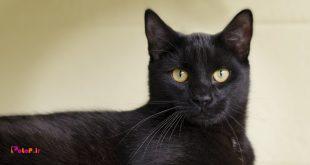 """17 اوت """"روز گربه سیاه"""" است."""