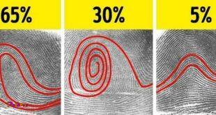 اثر انگشت فقط ۵ درصد مردم دنیا قوسی شکل است