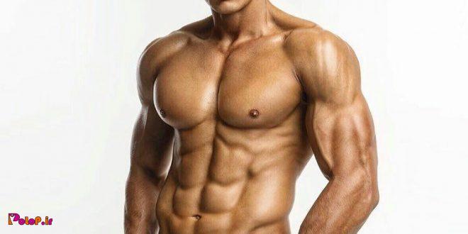 ❇️ مهندسی حجیم سازی عضلات