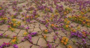اینجا صحرای آتاکاماست در شیلی