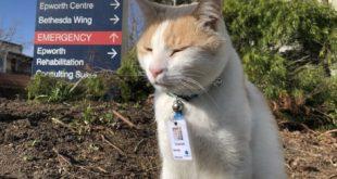 تو ریچموند استرالیا، یک گربه رو در بخش حراست استخدام کردند،