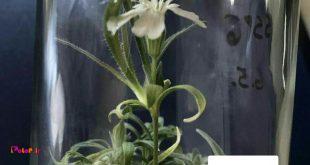 این گیاه شاید قدیمی ترین موجود زندهی روی زمین باشه.