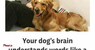 یک سگ بالغ اندازه یک بچهی یک ساله میتونه کلمات رو متوجه بشه!