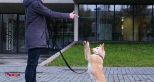پژوهشهای جدید نشون میده که سگهایی که با استفاده از تنبیه آموزش دیدن، استرس و اضطراب بالاتری نسبت به سگهایی که با روش پاداش (غذا در مقابل انجام کاری) آموزش دیدن دارن!