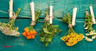 سبزیهای ضدسرطان را بشناسید !🍀