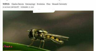 آیا بیش بینی 160 سال پیش داروین که گفته بود یه روزی حشرات دیگه پرواز نمیکنند درسته؟!