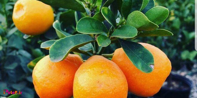 مزایای نارنج