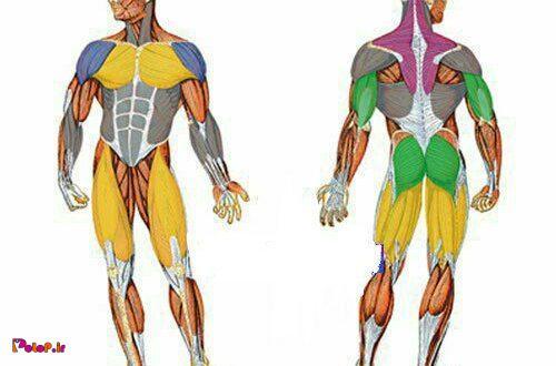 عضلاتمون چقدر درگیر میشن؟