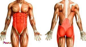 آیا عضله در زمان تمرین ساخته می شود؟