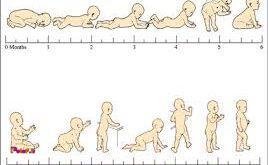 آشنایی با مراحل رشد کودک