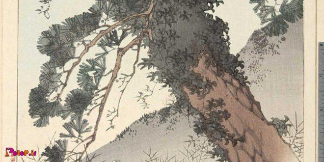 در گذشته در ژاپن رسمی وجود داشته به نام اوباسوته به معنای «رهاسازی یک پیرزن»!