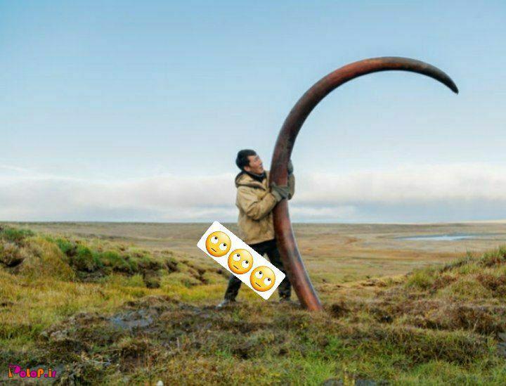 یک عاج ۱۲ هزار ساله ماموت رو میبینید که در سیبری پیدا شده!