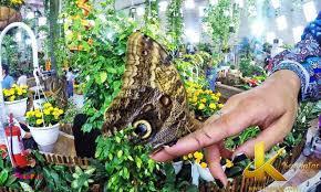 باغ پروانه در نزدیکی شهر پاتایا ، تایلند.