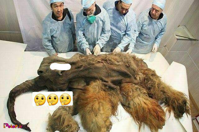 جسد ماموت ۳۹ هزار ساله!