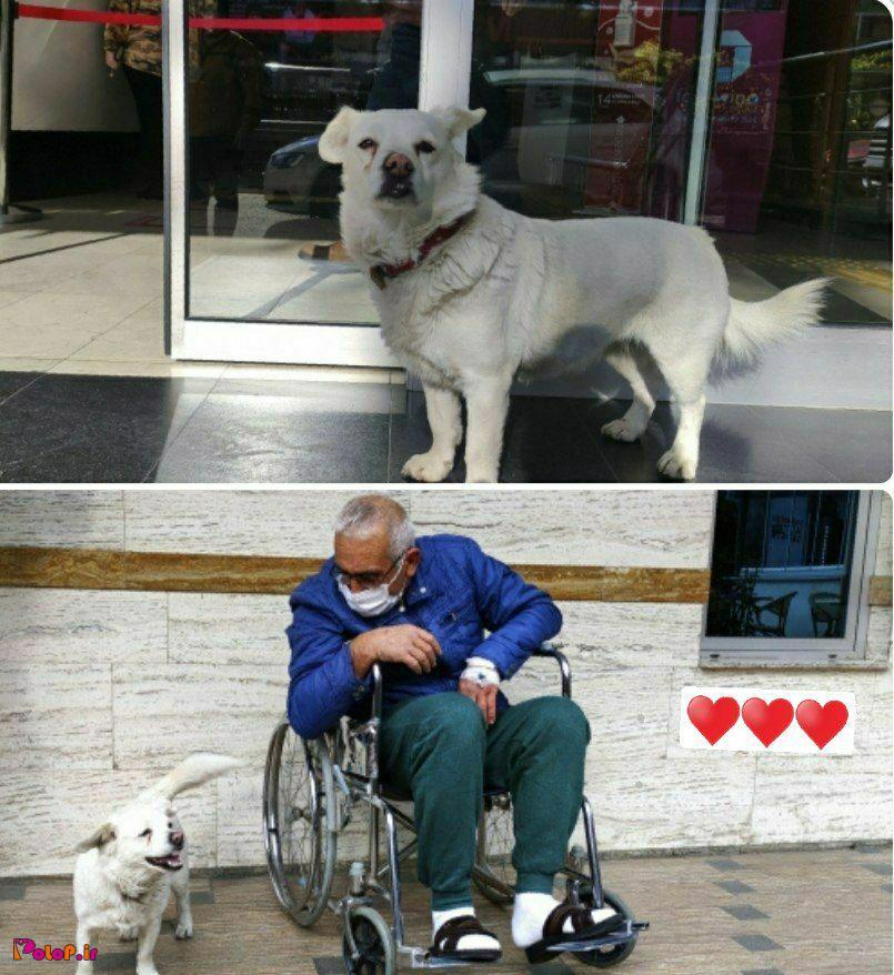 این سگ متعلق به یکی از اهالی شهر استانبول هست!