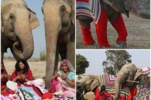 مردم هند برای محافظت از فیلها در برابر هوای سرد، براشون ژاکت میبافند!
