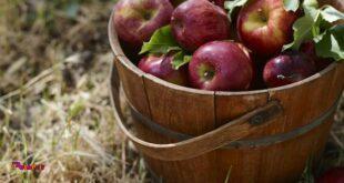 برگ در زوال می افتد و میوه در کمال