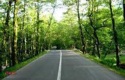 جنگل سه هزار ، شهسوار، مازندران😍