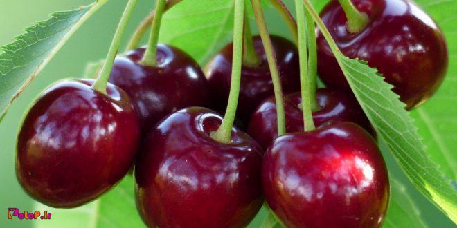 فواید خوردن روزانه گیلاس در تابستان
