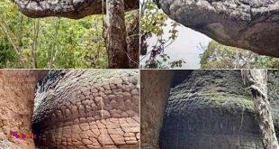 در تایلند هم یک غاری هست که سنگهاش شبیه یک مار غول پیکیره.